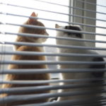 Cat-Proofing Your Blinds - Blinds West - Window Blinds and Coverings - Featured Image
